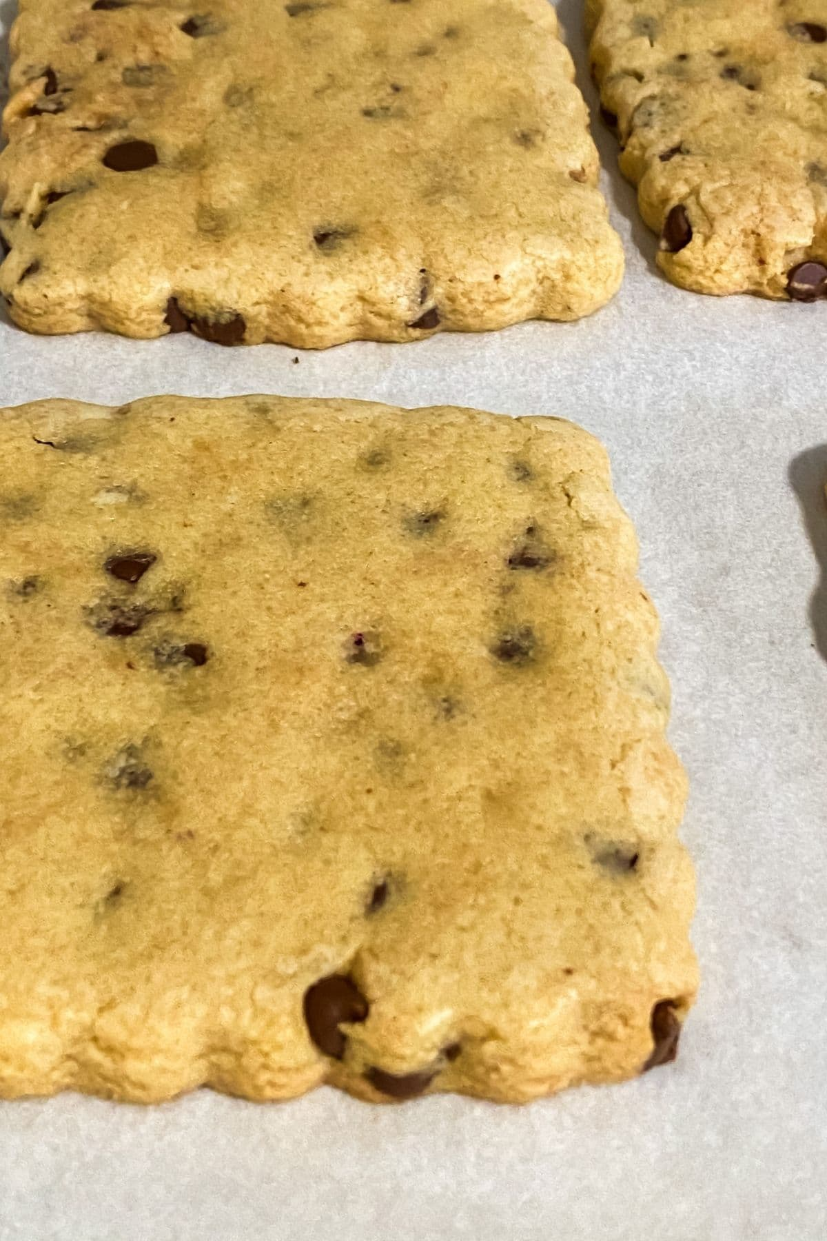 Baked chocolate chip cookies on baking sheet
